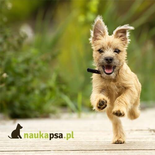 Szczęśliwy pies ikona